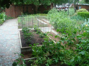 The Governor's Vegetable Patch