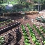 NC Governor's Gardens